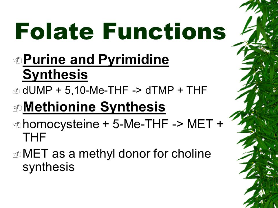 Folate Functions Purine and Pyrimidine Synthesis Methionine Synthesis
