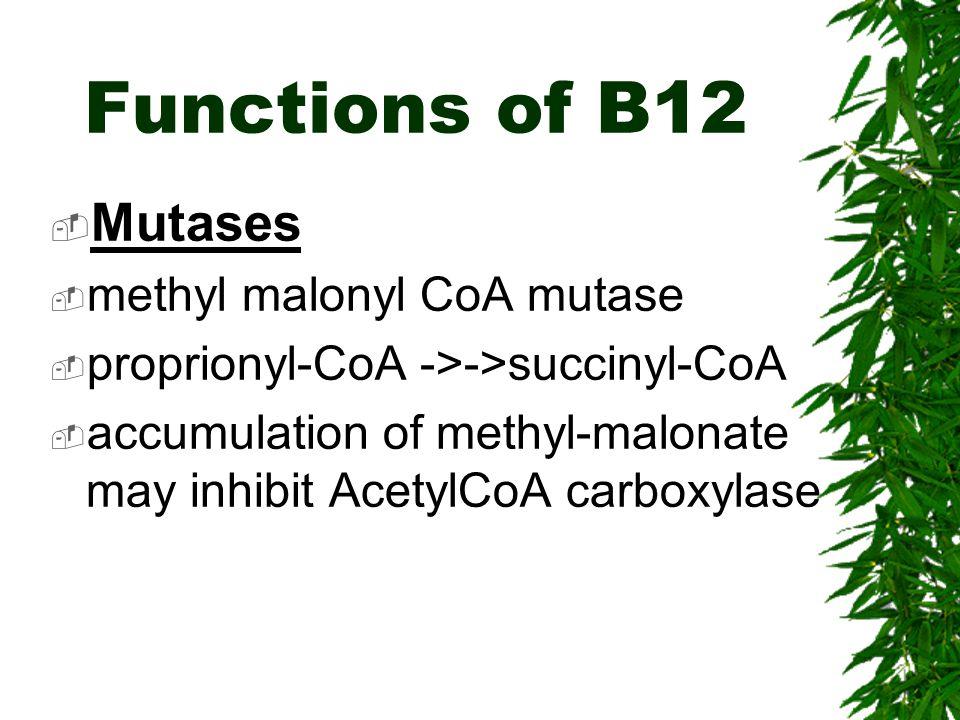 Functions of B12 Mutases methyl malonyl CoA mutase