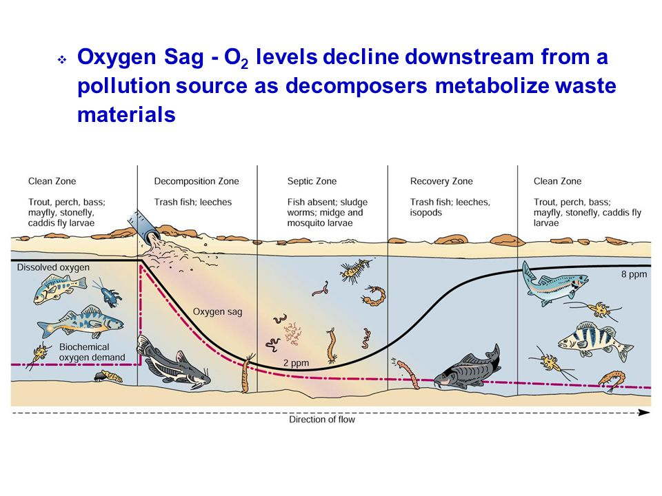Oxygen Sag - O2 levels decline downstream from a pollution source as decomposers metabolize waste materials