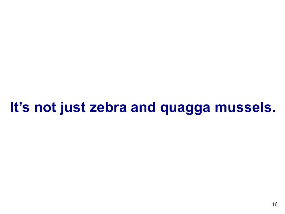 It's not just zebra and quagga mussels.