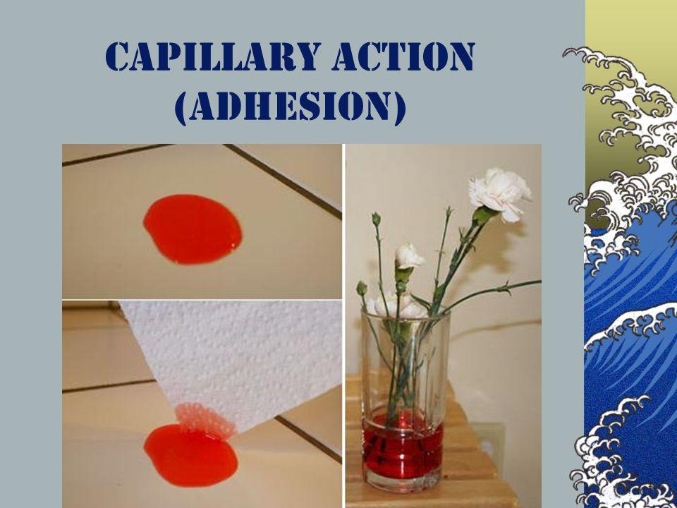 Capillary Action (Adhesion)