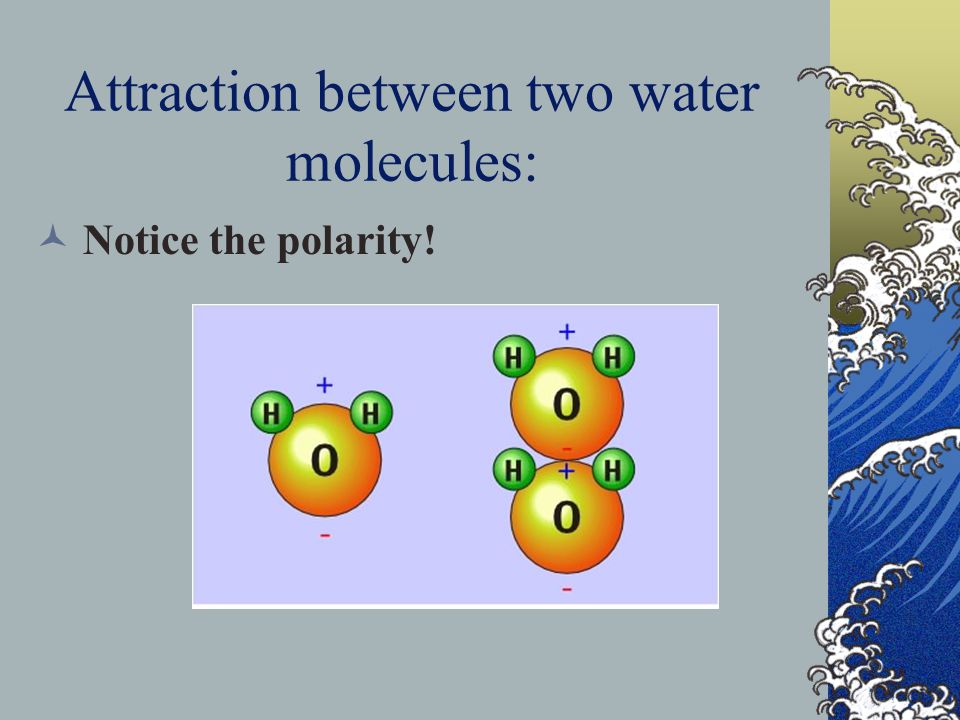 Attraction between two water molecules: