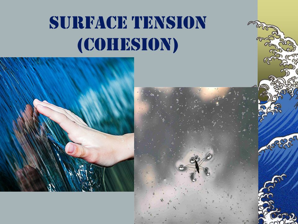 Surface Tension (Cohesion)
