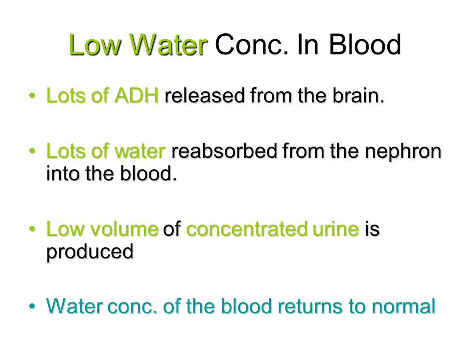 Low Water Conc. In Blood Lots of ADH released from the brain.