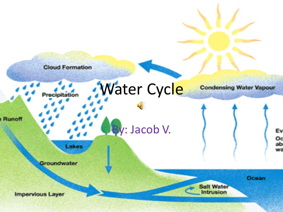 Water Cycle By: Jacob V.