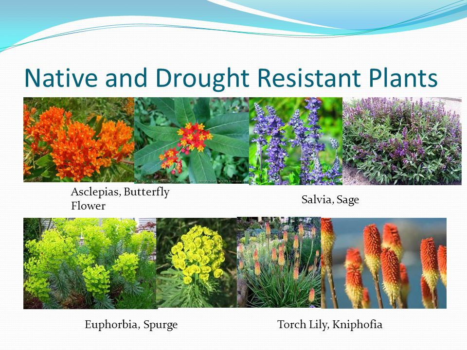 Native and Drought Resistant Plants