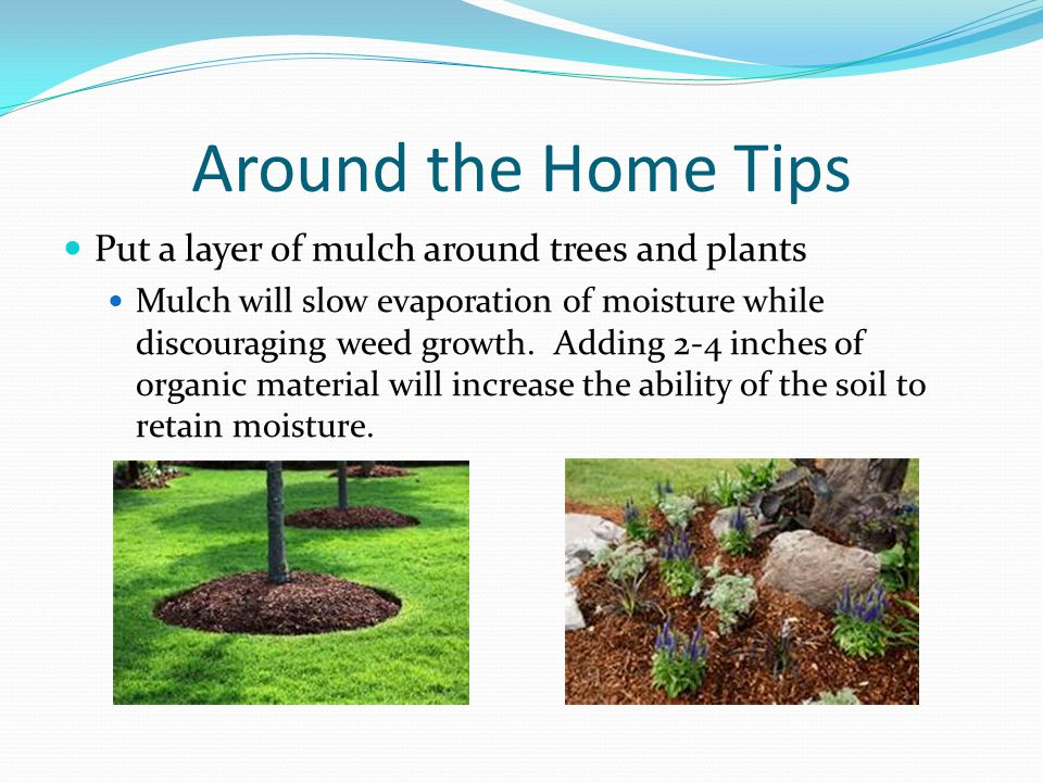 Around the Home Tips Put a layer of mulch around trees and plants