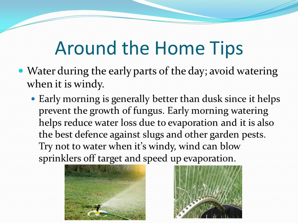 Around the Home Tips Water during the early parts of the day; avoid watering when it is windy.