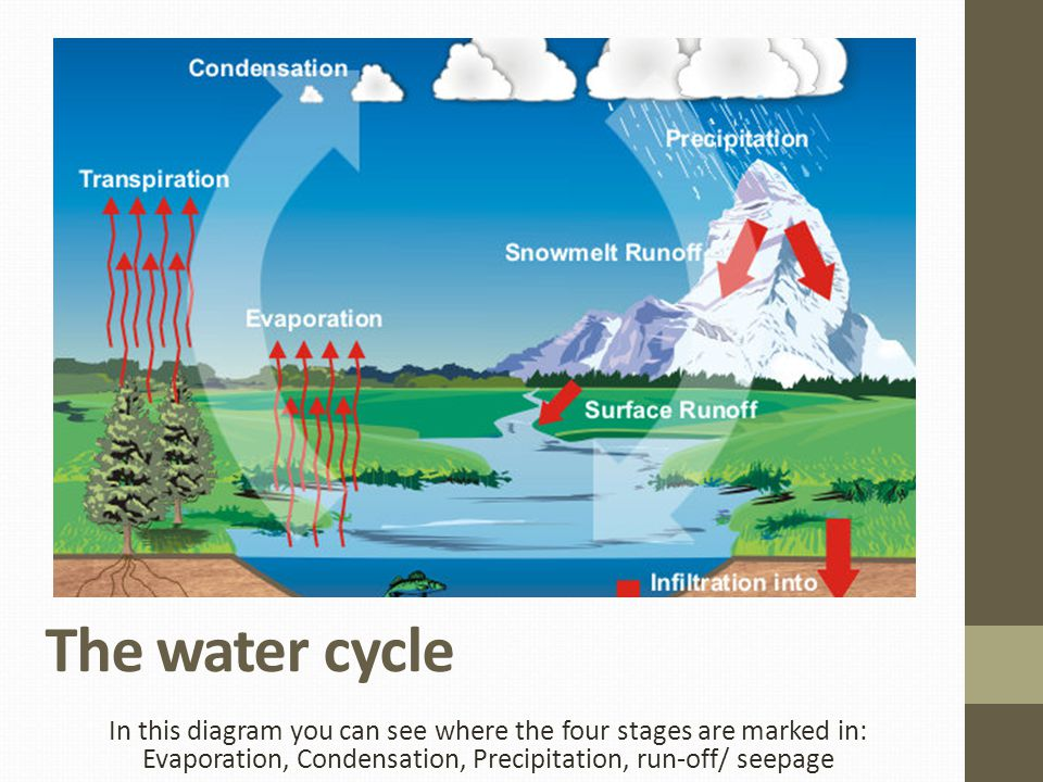 The water cycle In this diagram you can see where the four stages are marked in: Evaporation, Condensation, Precipitation, run-off/ seepage.