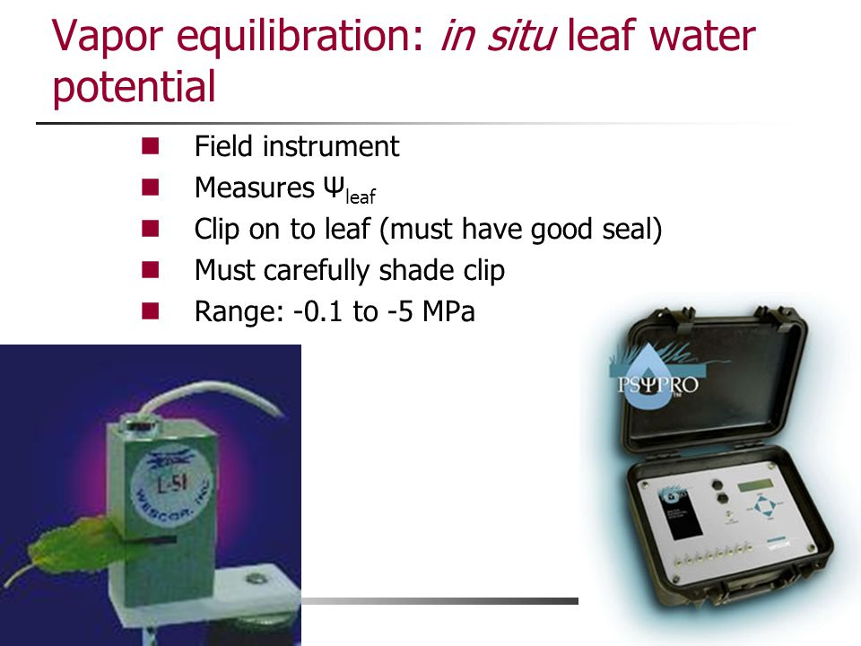 Vapor equilibration: in situ leaf water potential