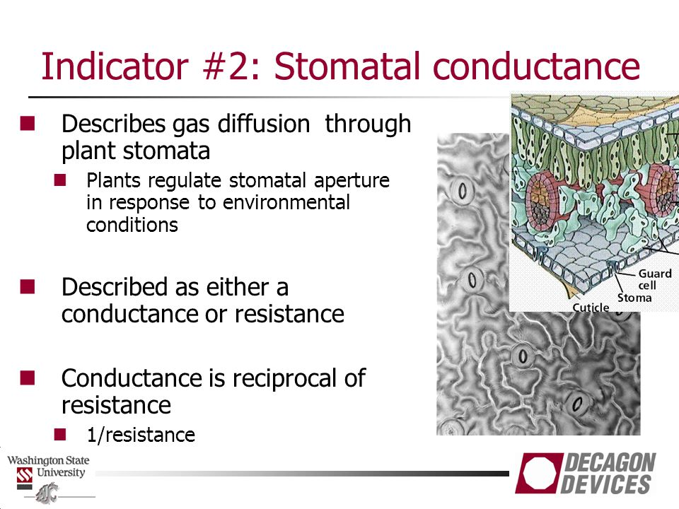 Indicator #2: Stomatal conductance