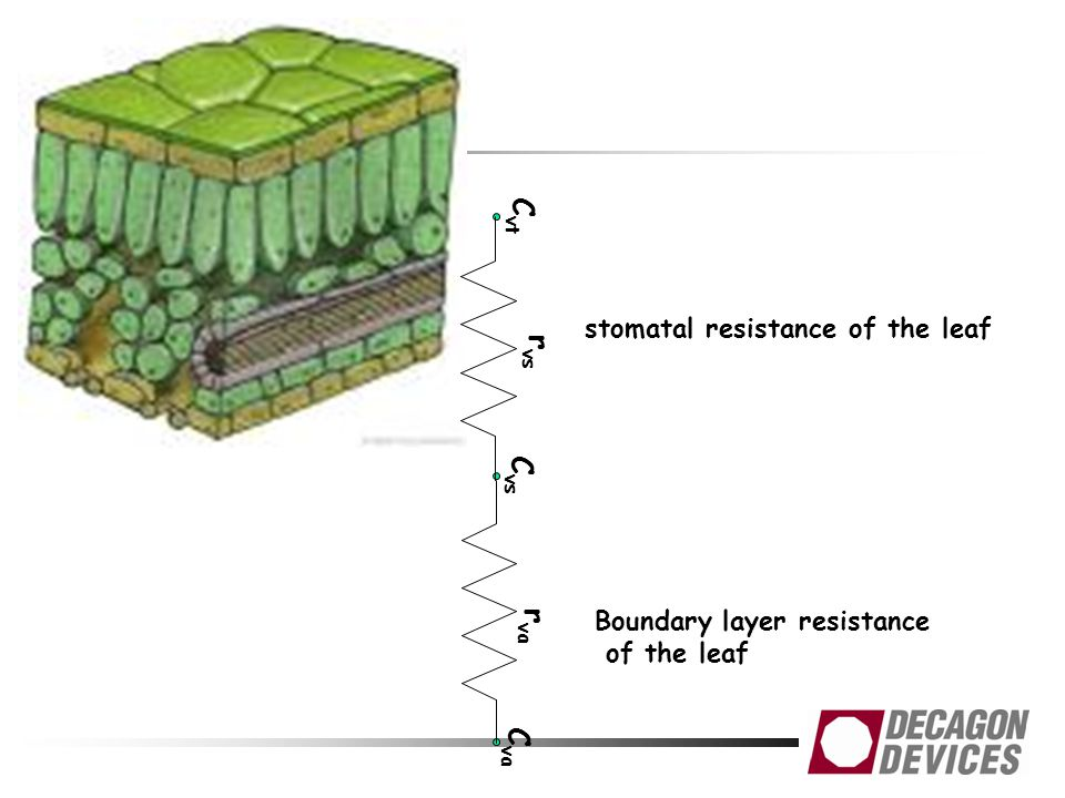 Cvt rvs Cvs rva Cva stomatal resistance of the leaf
