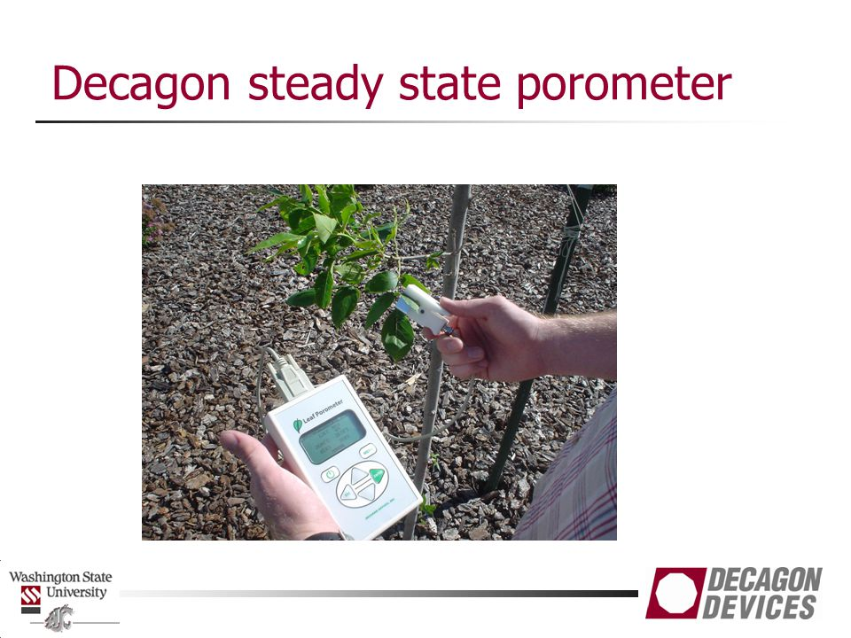 Decagon steady state porometer