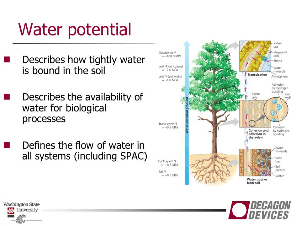 Water potential Describes how tightly water is bound in the soil