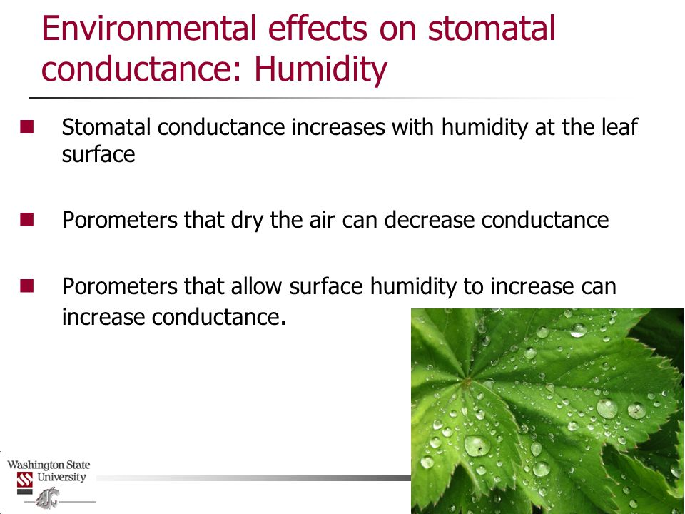 Environmental effects on stomatal conductance: Humidity