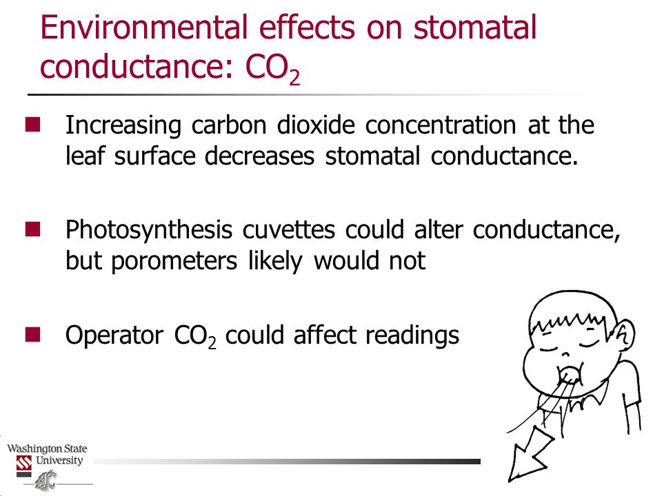 Environmental effects on stomatal conductance: CO2
