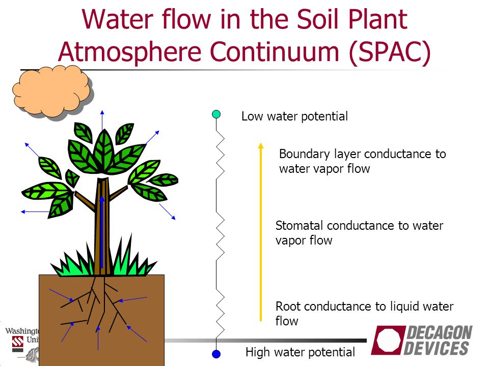 Water flow in the Soil Plant Atmosphere Continuum (SPAC)