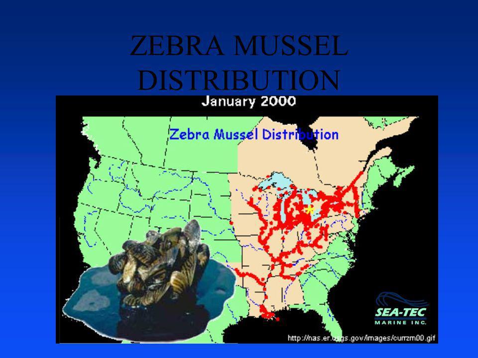 ZEBRA MUSSEL DISTRIBUTION