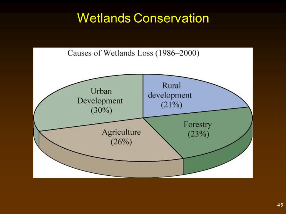 Wetlands Conservation