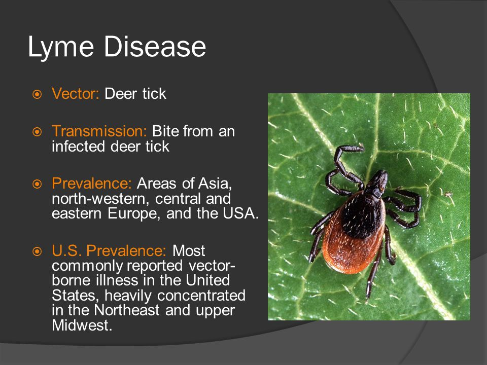 Lyme Disease Vector: Deer tick
