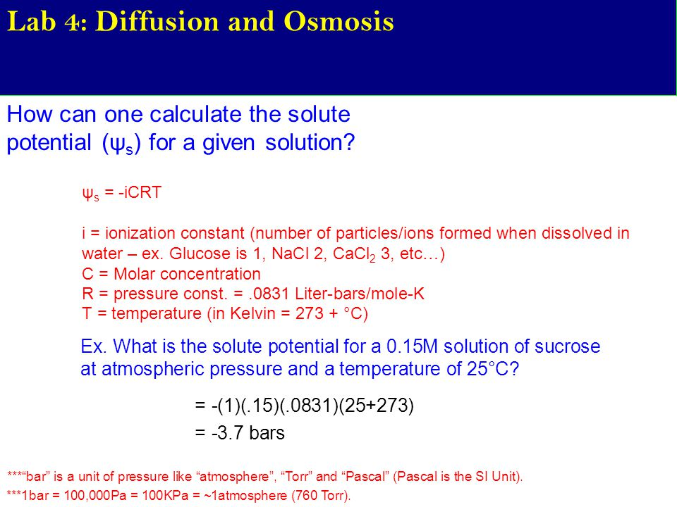 Lab 4: Diffusion and Osmosis