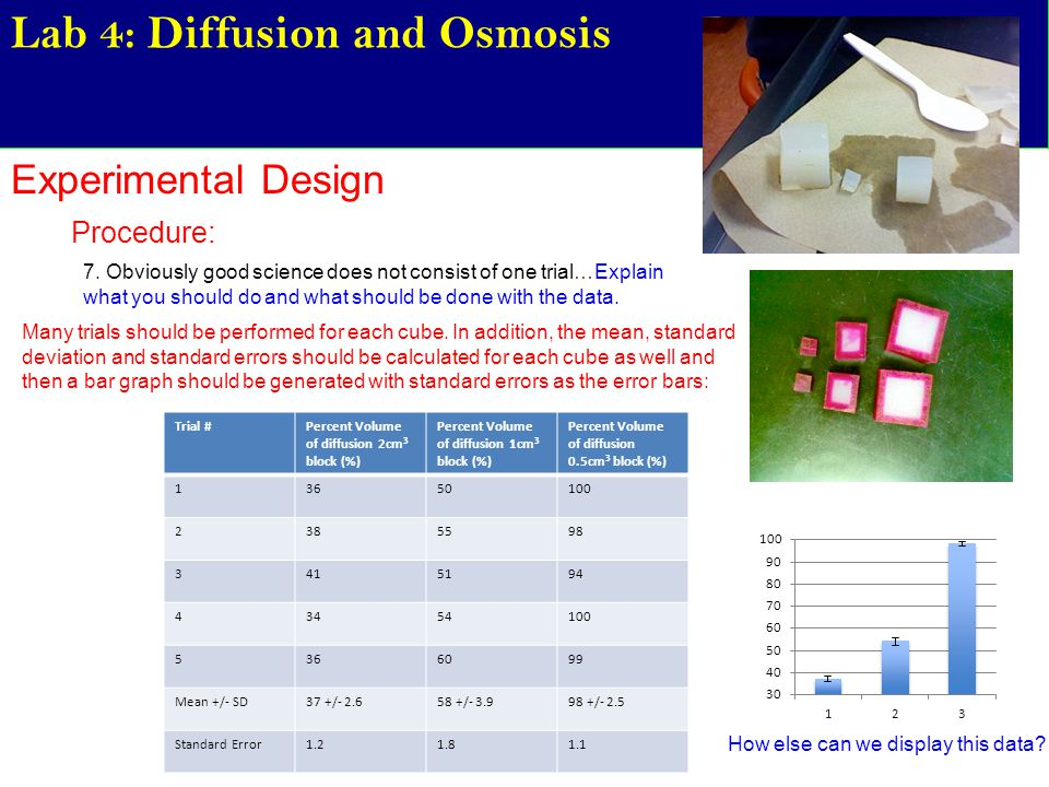 carolina lab report diffusion and osmosis Diffusion osmosis lab report share sign in the version of the browser you are using is no longer supported please upgrade to a supported browserdismiss file edit.