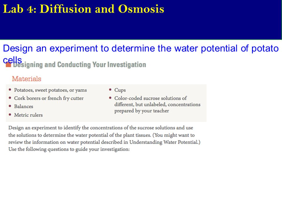 determination of water potential of potato