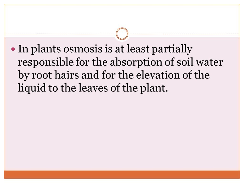 In plants osmosis is at least partially responsible for the absorption of soil water by root hairs and for the elevation of the liquid to the leaves of the plant.