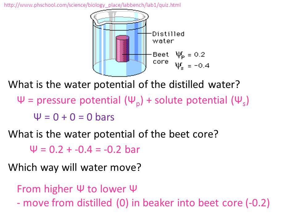 Ψ = pressure potential (Ψp) + solute potential (Ψs) Ψ = 0 + 0 = 0 bars