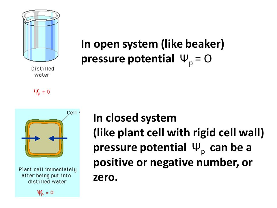 In open system (like beaker) pressure potential Ψp = O