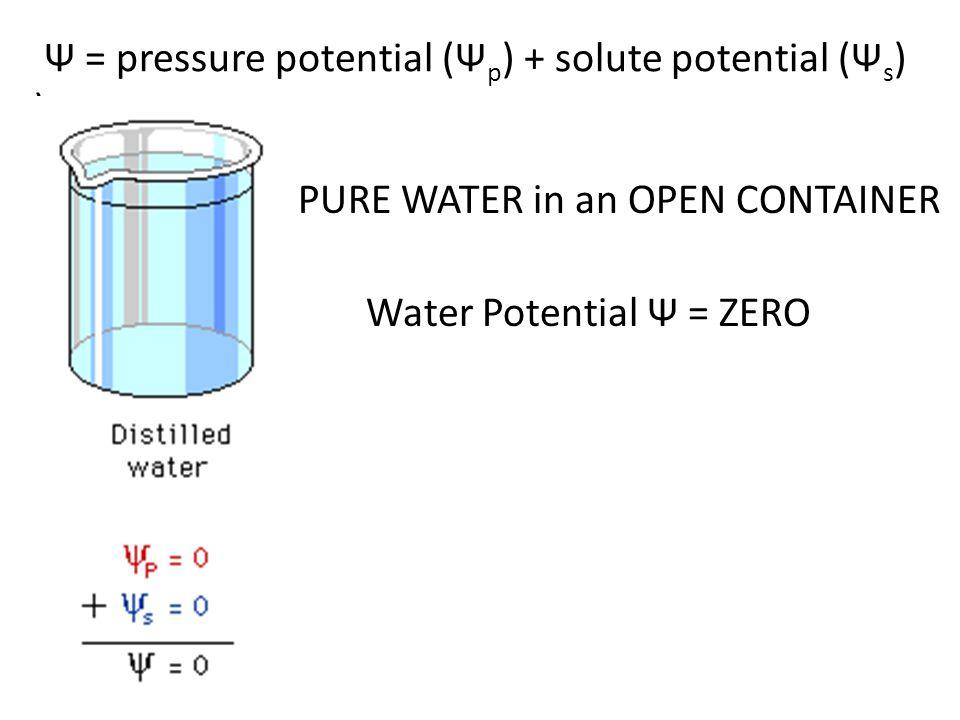 Ψ = pressure potential (Ψp) + solute potential (Ψs) )