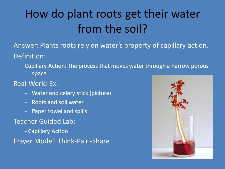 How do plant roots get their water from the soil