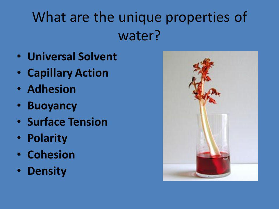 What are the unique properties of water