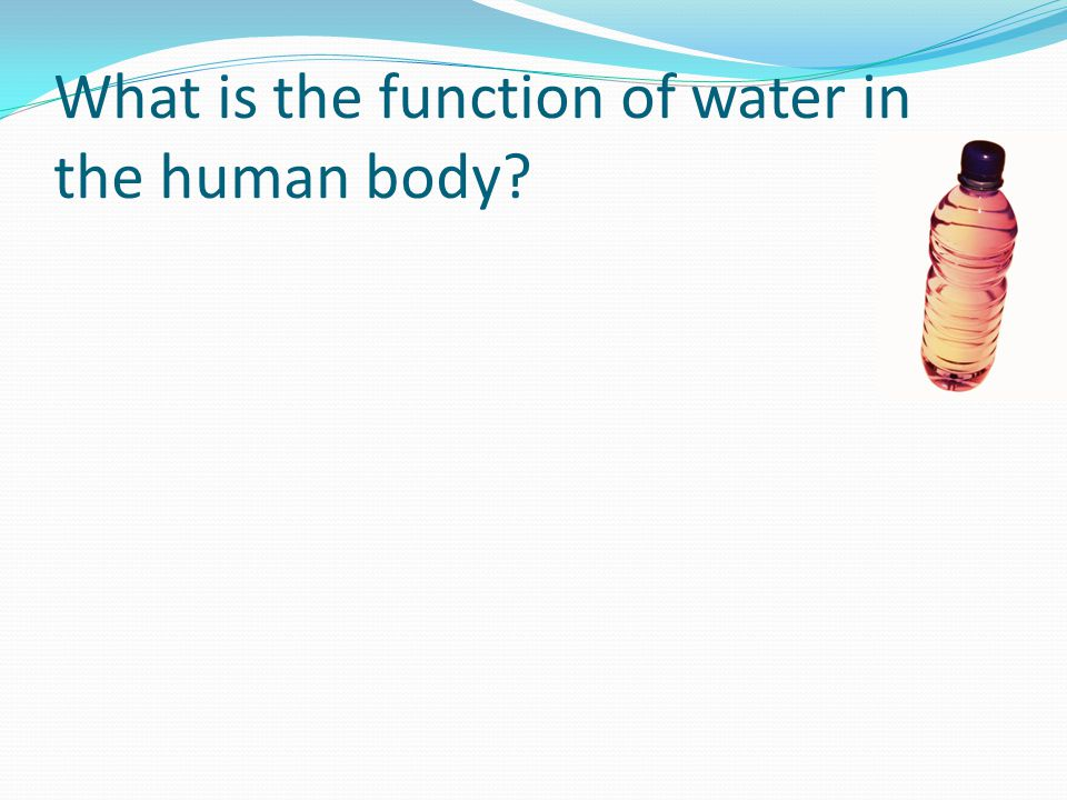 What is the function of water in the human body