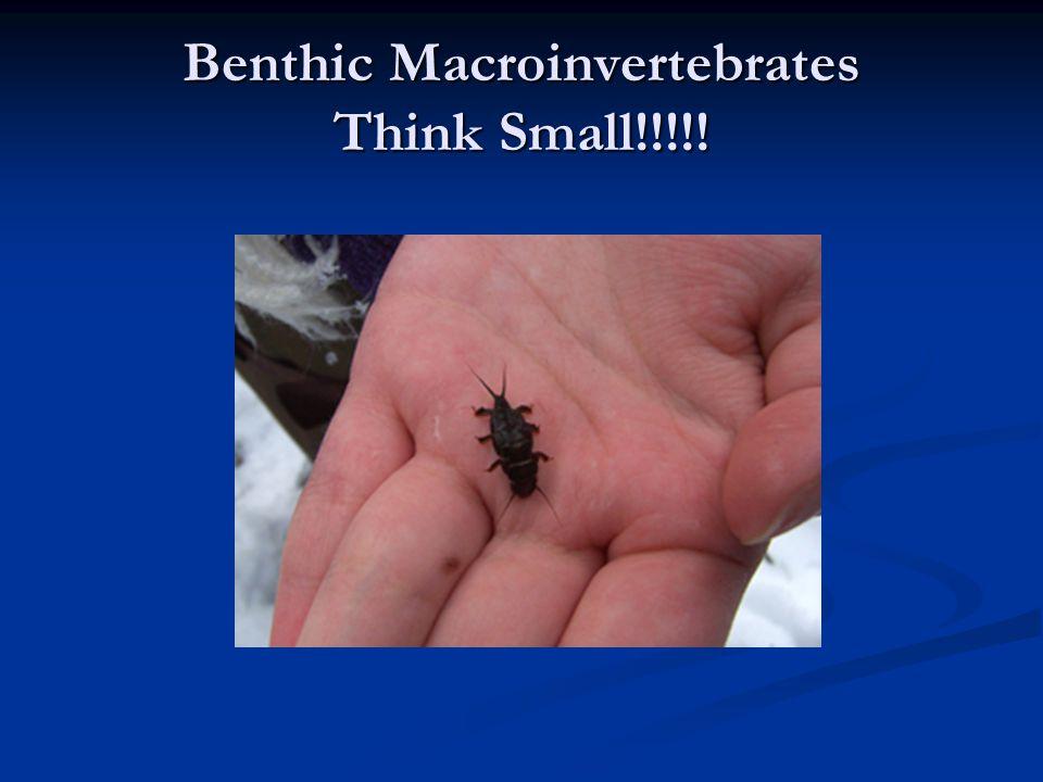 Benthic Macroinvertebrates Think Small!!!!!