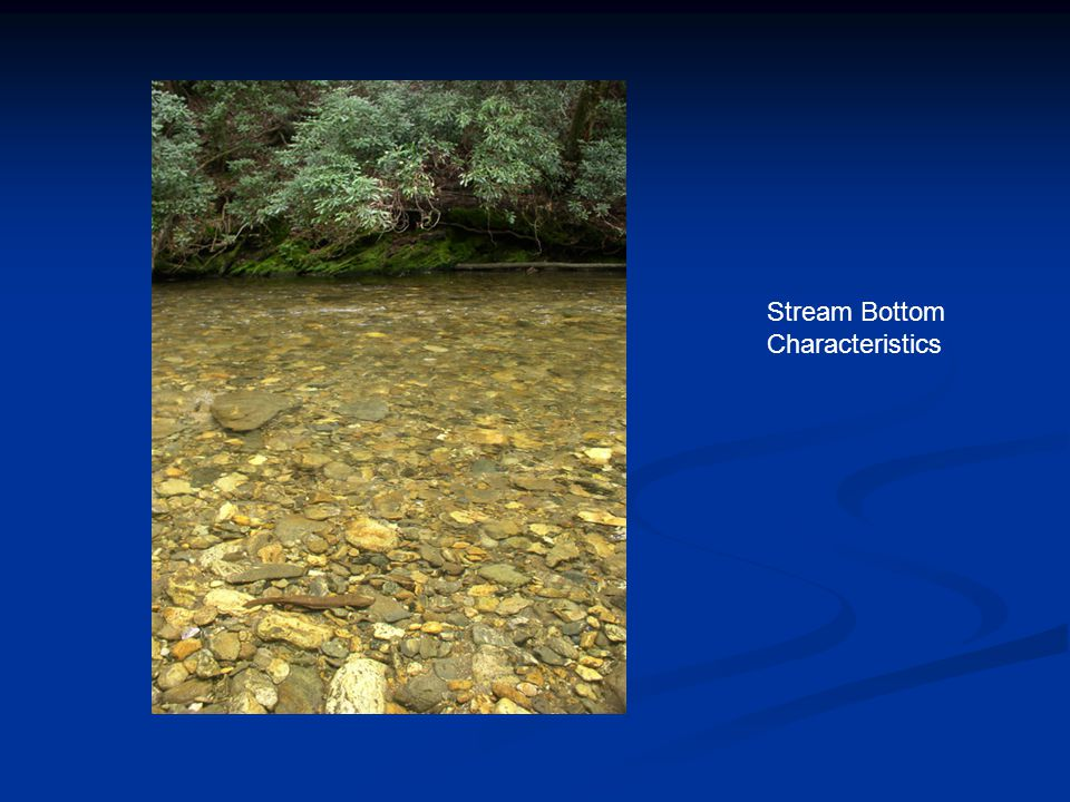 Stream Bottom Characteristics