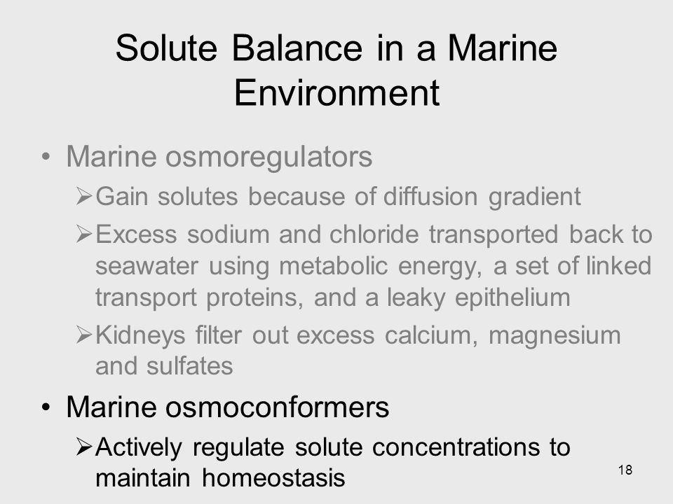 Solute Balance in a Marine Environment