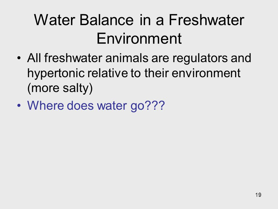 Water Balance in a Freshwater Environment