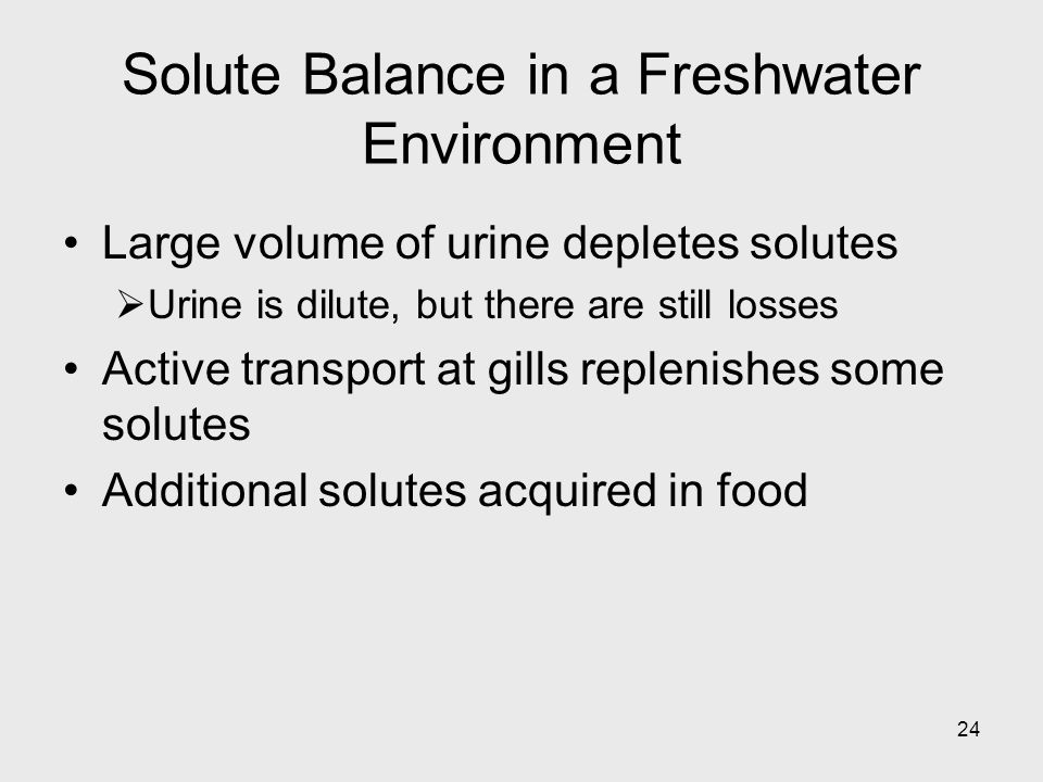 Solute Balance in a Freshwater Environment