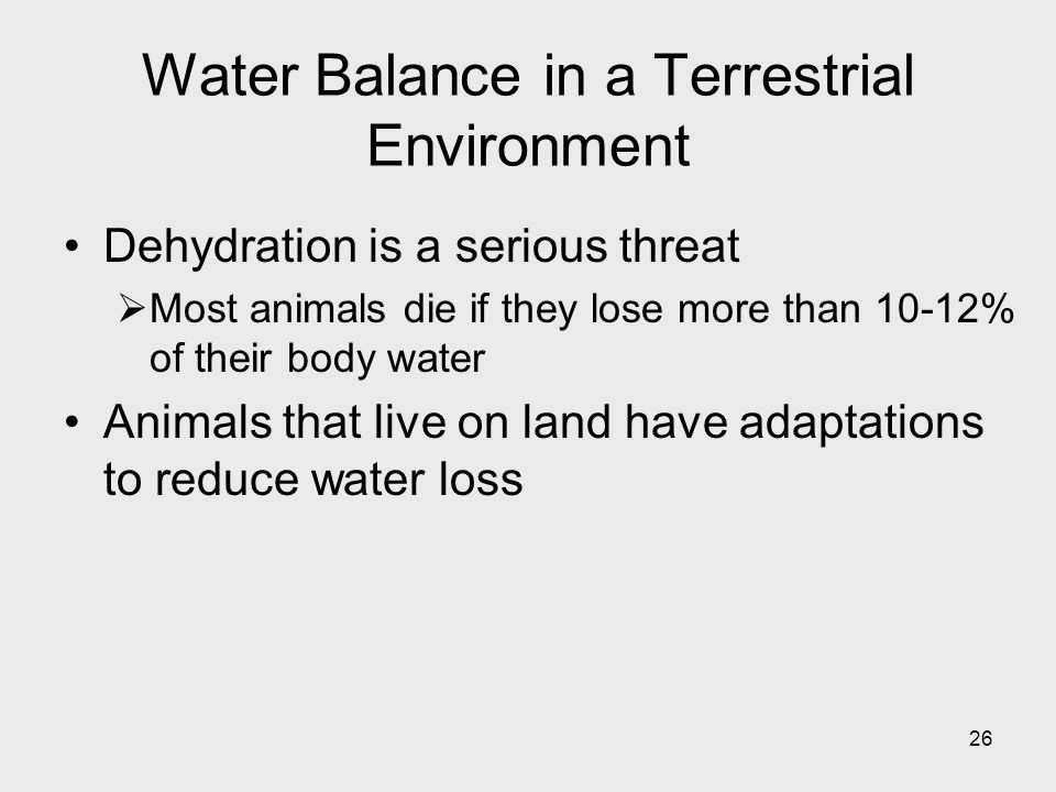 Water Balance in a Terrestrial Environment