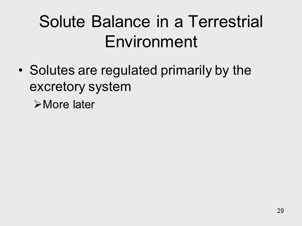 Solute Balance in a Terrestrial Environment