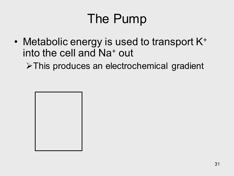 The Pump Metabolic energy is used to transport K+ into the cell and Na+ out.