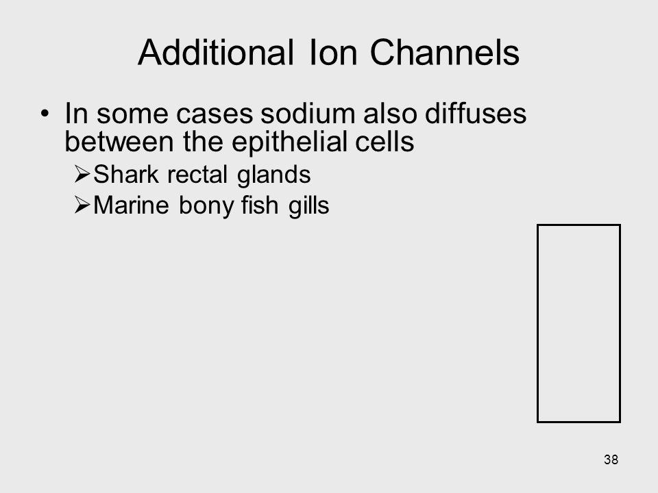 Additional Ion Channels