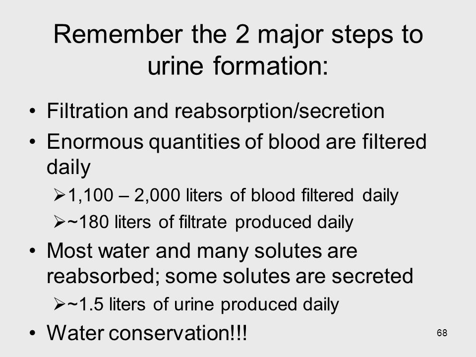 Remember the 2 major steps to urine formation: