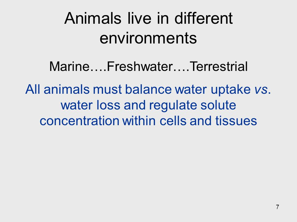Animals live in different environments