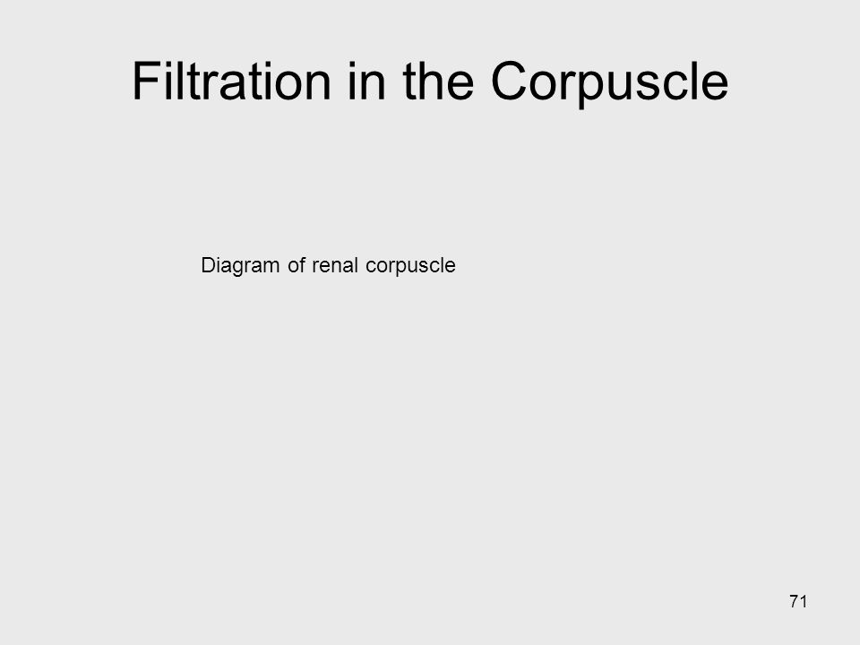 Filtration in the Corpuscle