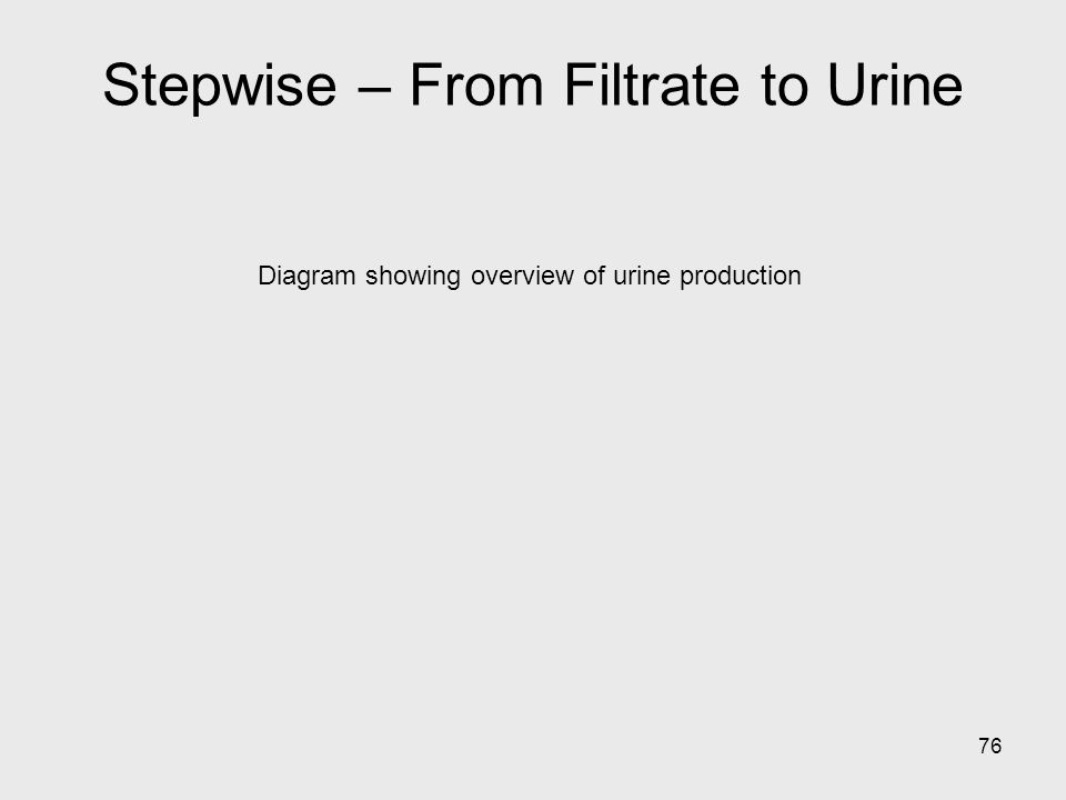 Stepwise – From Filtrate to Urine