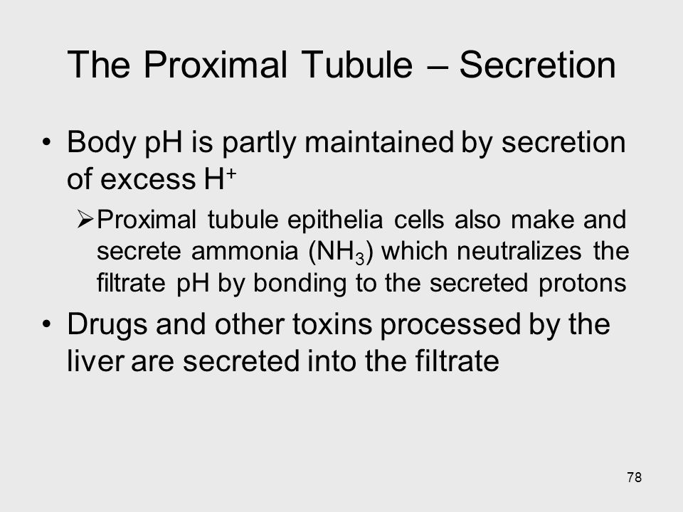 The Proximal Tubule – Secretion