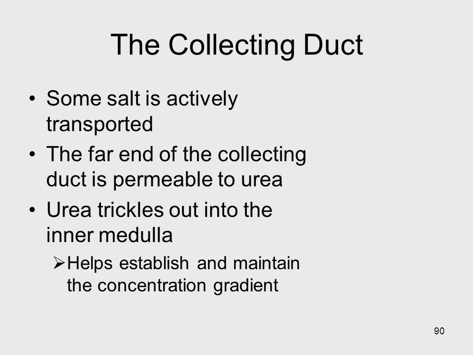 The Collecting Duct Some salt is actively transported