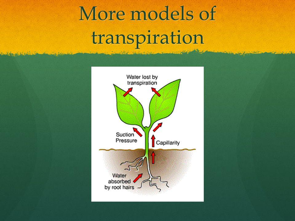 More models of transpiration